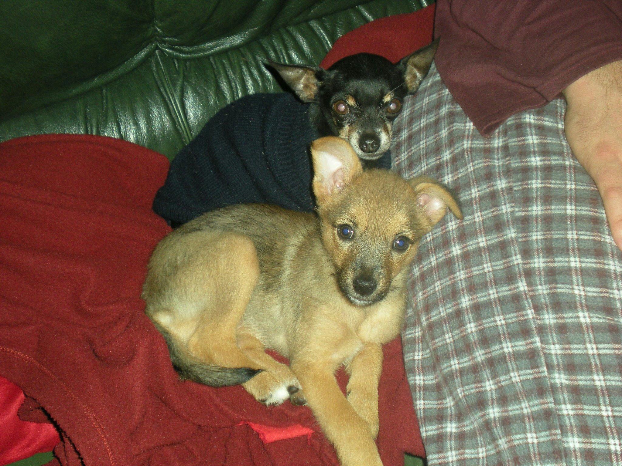 Lili y Coco